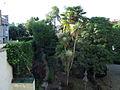 190 Casa Alegre de Sagrera (Terrassa), els jardins, vistos des del primer pis.JPG
