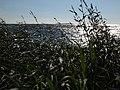 20.07.2012 - panoramio.jpg