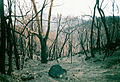 2003 Bushfires aftermath near Anglers Rest.jpg
