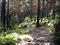 2011-09-17 Carril del Gallo - panoramio (2).jpg