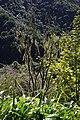 2012-10-26 13-21-27 Pentax JH (49282549692).jpg