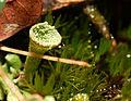 2012-11-18 16-30-13-lichen.jpg