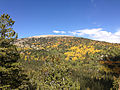 2014-09-15 11 11 01 View of Bald Mountain and its Aspens during autumnal foliage coloration from the Bristlecone Trail and the Glacier Trail in Great Basin National Park, Nevada.JPG