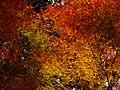2014-11-24 Sekiganji 石龕寺 DSCF4738.jpg