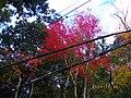 2 Minookōen, Minoo-shi, Ōsaka-fu 562-0002, Japan - panoramio (1).jpg