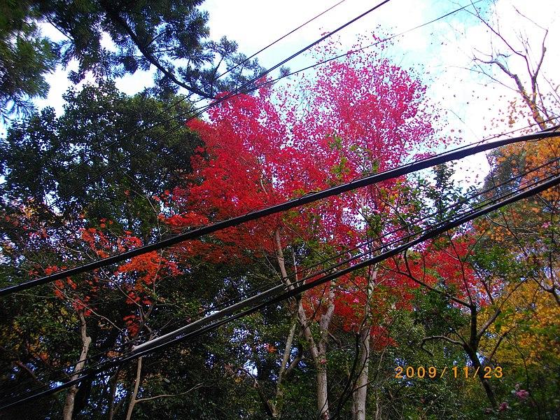 File:2 Minookōen, Minoo-shi, Ōsaka-fu 562-0002, Japan - panoramio (1).jpg