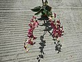 3905Orchids in the Philippines 02.jpg