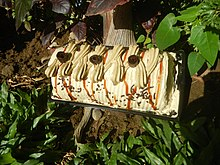 9823Mocha cakes in the Philippines 03.jpg