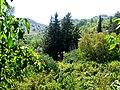 A@a Askas village nicosia cyprus - panoramio.jpg
