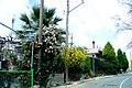 A@a colors palehori village cyprus - panoramio (3).jpg