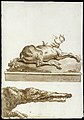 A Stag Lying Down (on a base)- The Head of a Crocodile MET DT3238.jpg