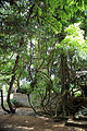 A climber creeper and tree Gibberd Garden Essex England 01.JPG