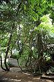 A climber creeper and tree Gibberd Garden Essex England 01.JPG