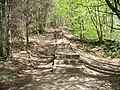 A flight of steps on a walk through Chatelherault Country Park - geograph.org.uk - 808831.jpg