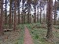 A footpath through the trees at Glan Faenol, Bangor - geograph.org.uk - 2378444.jpg