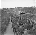 A long line of German prisoners being marched back along a road near Abbeville, 1 September 1944.jpg