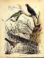 A popular history of birds (19394032559).jpg