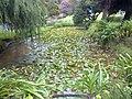 A scene of botanical garden Ooty 15.jpg