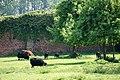 Abdij van Vlierbeek - boomgaard.jpg