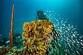 Abrolhos Marine National ParkRobertoCostaPinto05.jpg