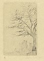 Acacia, print by James Ensor, 1888, Prints Department, Royal Library of Belgium, S. V 85367.jpg