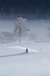 Skilanglauf Wikipedia