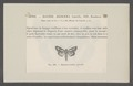 Aegocera - Print - Iconographia Zoologica - Special Collections University of Amsterdam - UBAINV0274 060 03 0058.tif