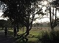 Afternoon light Centennial Park 001.jpg
