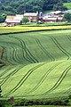 Aireyholme Farm - geograph.org.uk - 865294.jpg