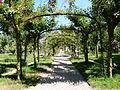 Allée de rosiers - jardin Albert Kahn.jpg
