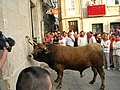 Allariz - Festa do Boi 2007 (529990186).jpg