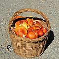 Amanita caesarea (Ovulo buono) September 14, 2013 034 (9740848314).jpg