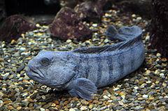 Ocean Fish Cat Food