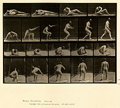Animal locomotion. Plate 258 (Boston Public Library).jpg