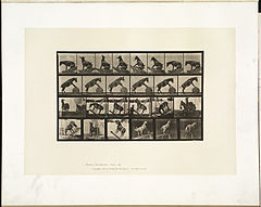 Animal locomotion. Plate 660 (Boston Public Library).jpg