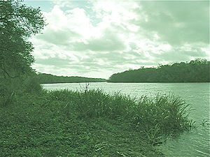 Apalachicola River - View of the Apalachicola River near Fort Gadsden, Florida
