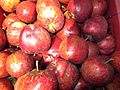 Apples at Sukhi Top near Gangotri WTK20150915-IMG 2696.jpg