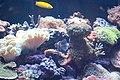 Aquarium at the Royal Ontario Museum (5784270025).jpg