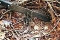 Aranha tarantula - panoramio (1).jpg