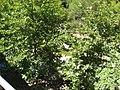Archaggelos, Greece - panoramio (36).jpg