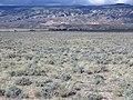 Artemisia pedatifida — Matt Lavin 014.jpg