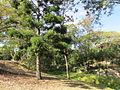 Ashgrove West Japoon Street park.jpg