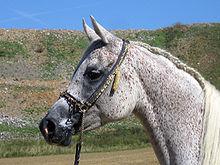 Gray horse - Wikipedia