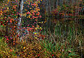 Autumn-lake-morning-foliage - Virginia - ForestWander.jpg