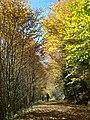 Autumn Stroll - panoramio.jpg