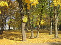 Autumn in Kharkiv. Ukrainu.jpg