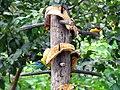 Aves - panoramio (3).jpg