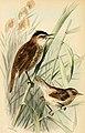 Aves Hungari enumeratio systematica avium Hungarium notis brevibus biologicis, locis inventionis virorumque a quibus oriuntur (1891) (14749592564).jpg