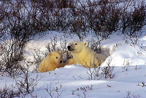 Bärenmutter & Junge 1 2000-11-20
