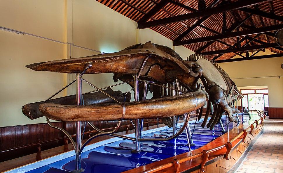 Bộ cốt cá voi